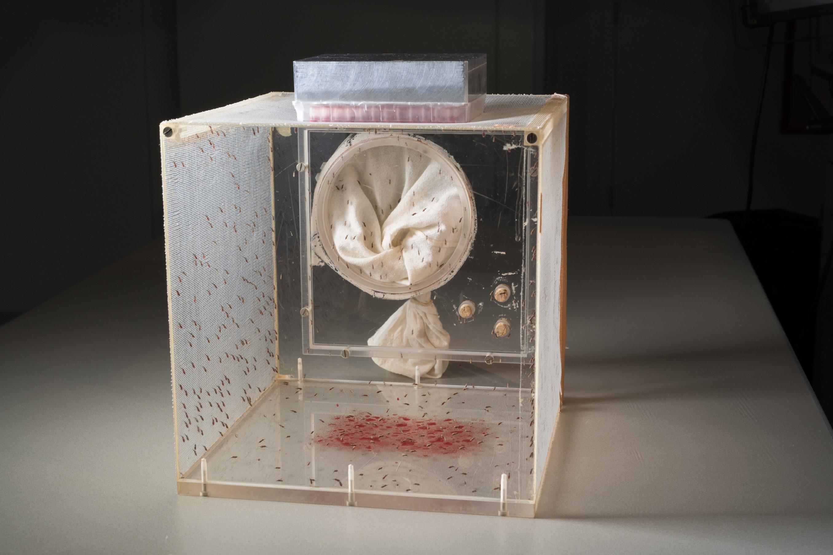 人工吸血装置