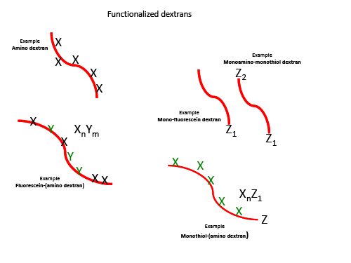 functionalizeddextrans